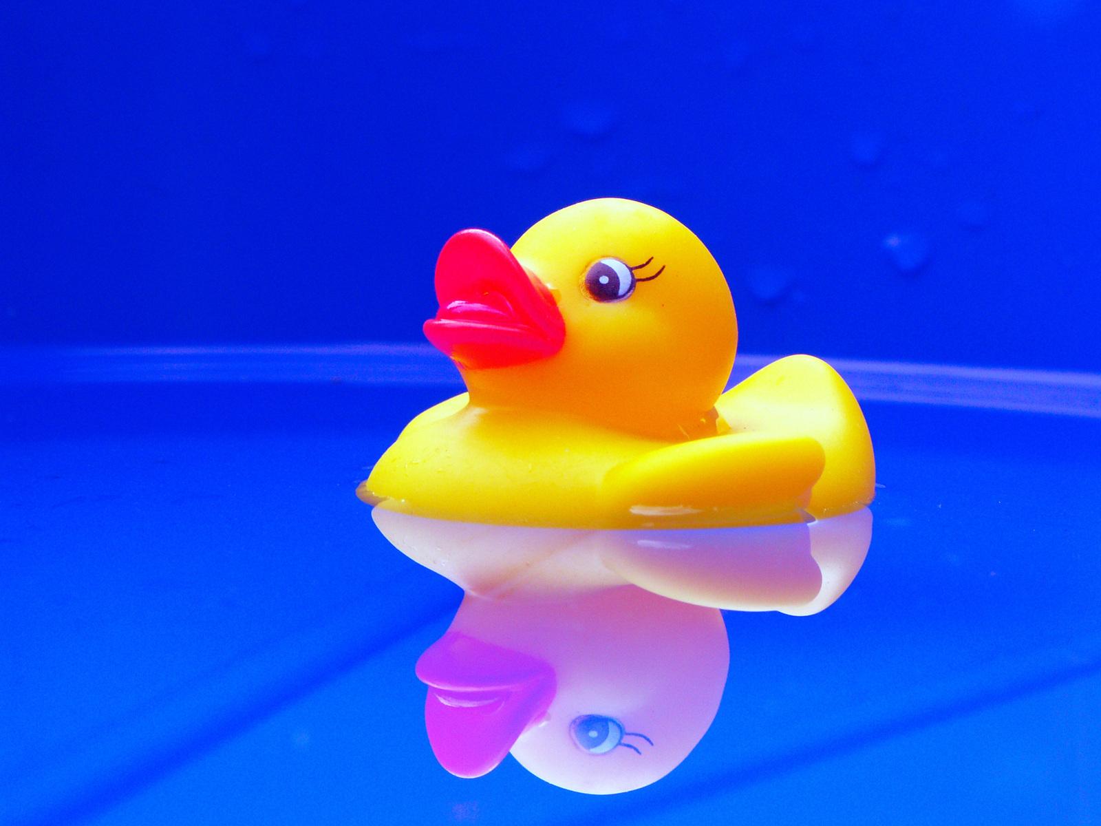 duck-1563094-1600x1200