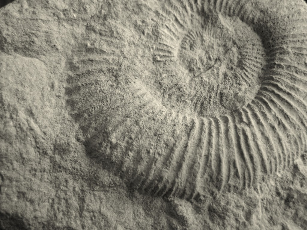 fossil-1174010