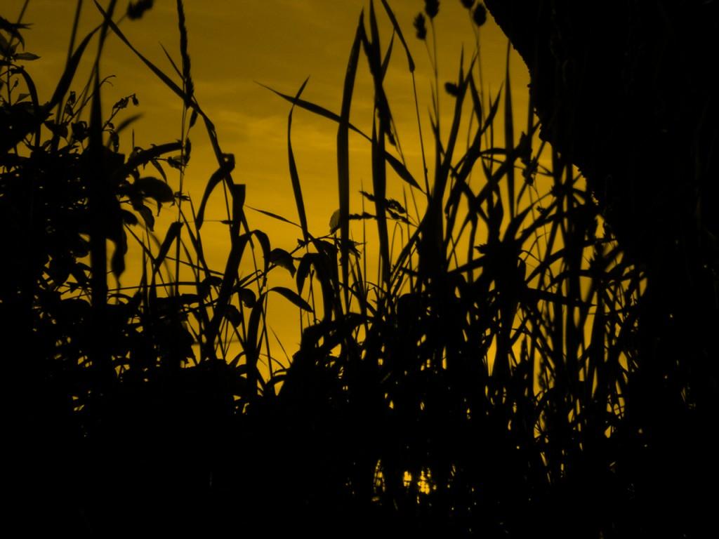 dark-evening-1192217-1280x960